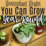 Houseplant Herbs To Grow Year Round