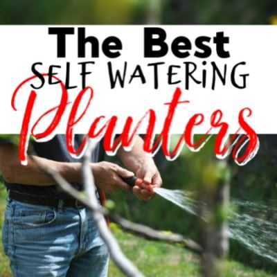 Best Self-Watering Planters