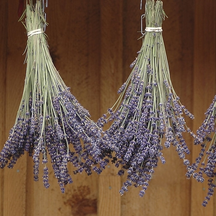 Whether you're thinking of growing lavender indoors, or growing lavender in pots, or even growing lavender from cuttings you've come to the right place.  Click through NOW to learn all you need to know....