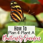 Planning & Planting A Butterfly Garden