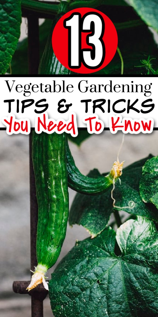 Are you new to gardening or just looking for some easy tips & tricks? These 13 Vegetable Gardening Tips and tricks are just what you need, click through NOW to read them all.,..