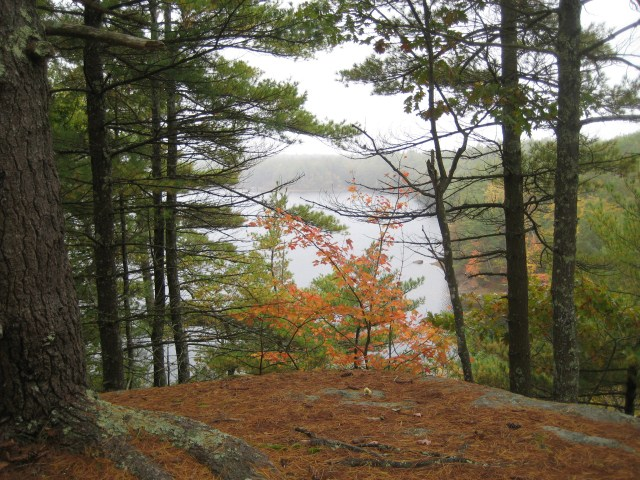 On this cloudy but warm fall day, we had lunch on the cliffs above Folly Pond, deep in the woods of York.