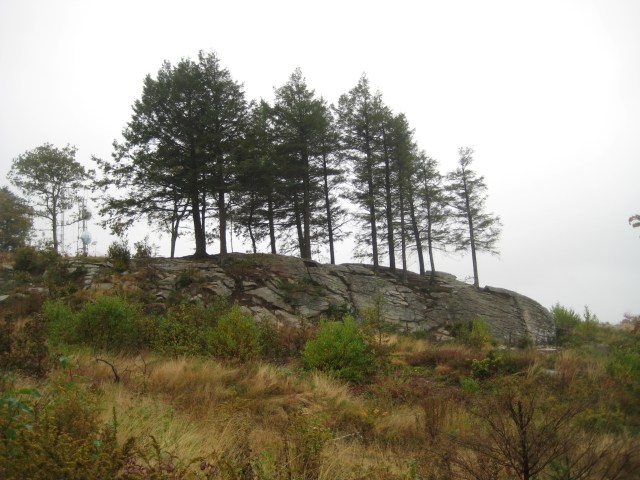 View of the cliffs and pine trees that greets hikers as they emerge from the Witch Hazel Trail onto the summit of Mount A.