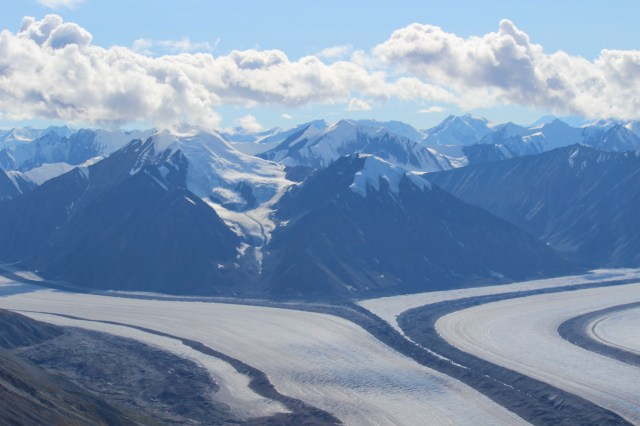 We began our flight over brown green alpine slopes where we could see specks of Dall sheep grazing, but soon began to fly up these glacier rivers into the heart of the Kluane ice fields.