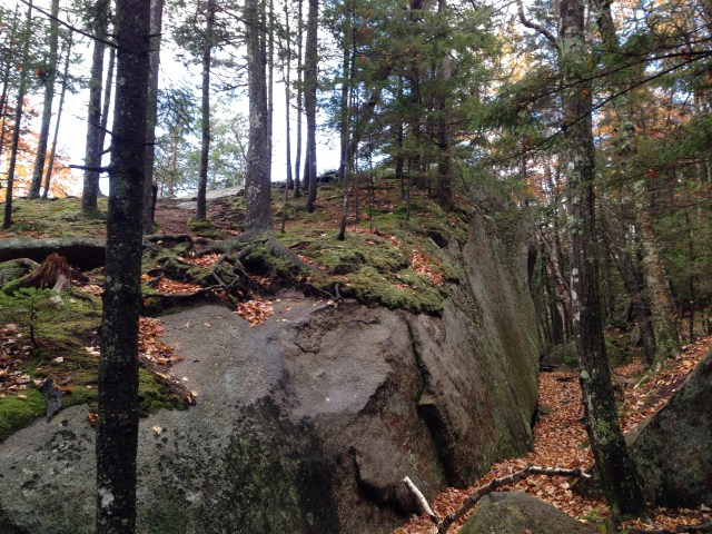 Just below Mount Mexico, the forest grows on top of a glacial erratic pushed here by the ice 11,000 years ago.