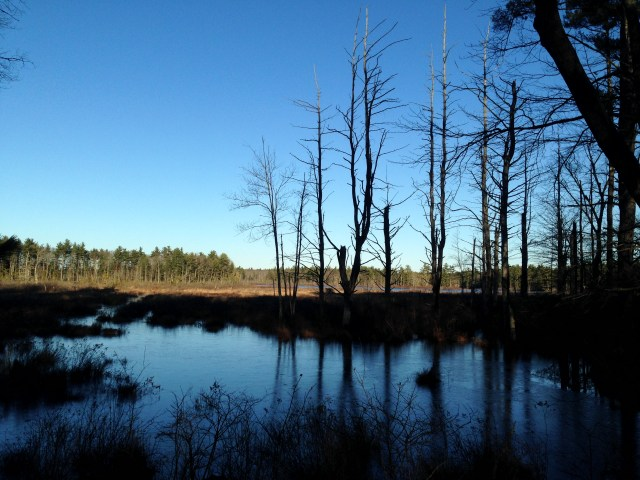 December view of York Pond.