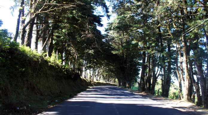 Costa Rica, Central America, Renting a car in costa Rica, Driving in costa rica, tree lined streets, beautiful scenery, diapersonaplane, diapers on a plane, traveling with kids, family travel