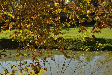 foglie dorate