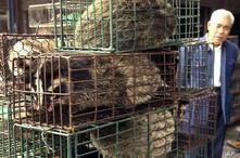 Un hombre observa gatos de civeta enjaulados en un mercado de vida silvestre en Guangzhou, capital de la provincia de Guangdong, sur de China, China, el 5 de enero.