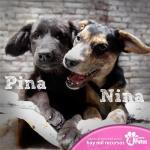 pag.2_Pina y Nina