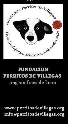 pag.10_perritos de villegas