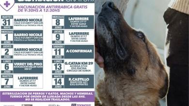 Photo of Salud Pública:Sigue la campaña gratuita de castración y vacunación animal