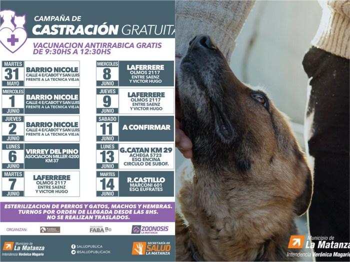 castracion zoonosis