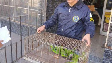 Photo of Virrey del Pino: Rescatan 159 aves protegidas que eran comercializadas ilegalmente