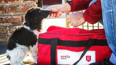 Photo of Más de 2400 mascotas vacunadas en un mes