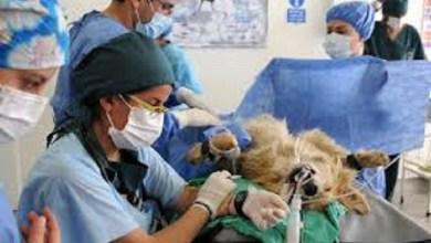 Photo of Cronograma de vacunación y castración animal para agosto