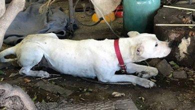 Photo of Maltrato Animal: Imputan a la dueña de un perro