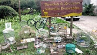 Photo of Rescatan aves protegidas que eran vendidas