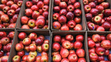 Photo of Agroindustria entrega $70 millones a productores