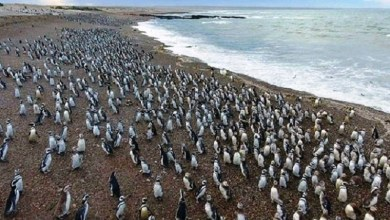 Photo of Punta Tombo: Llegaron los pinguinos¡¡