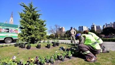 Photo of Muestra anual sobre plantas destinada a personas con discapacidad