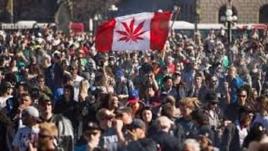 Photo of Canadá, el segundo país en legalizar la marihuana recreativa
