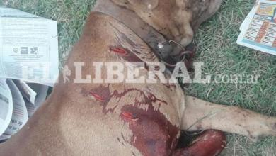 Photo of Se enojó porque un perro le ladró y le perforó el pulmón de una puñalada