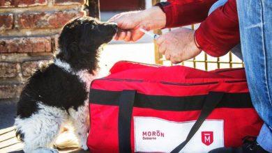 Photo of En solo tres años, Morón vacunó a más de 36 mil mascotas