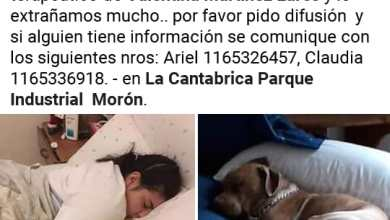 Photo of Haedo: una familia busca desesperadamente al perro terapéutico de Valentina