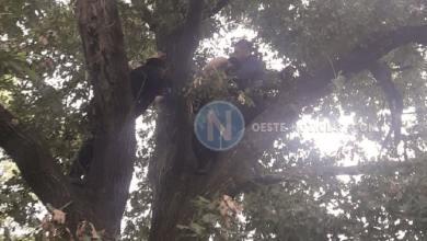 Photo of Hurlingham: Intentó suicidarse, dos policías le salvaron la vida