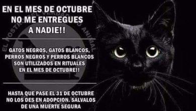 Photo of Denuncia que le robaron su gato negro para hacer rituales en el mes de «Halloween»