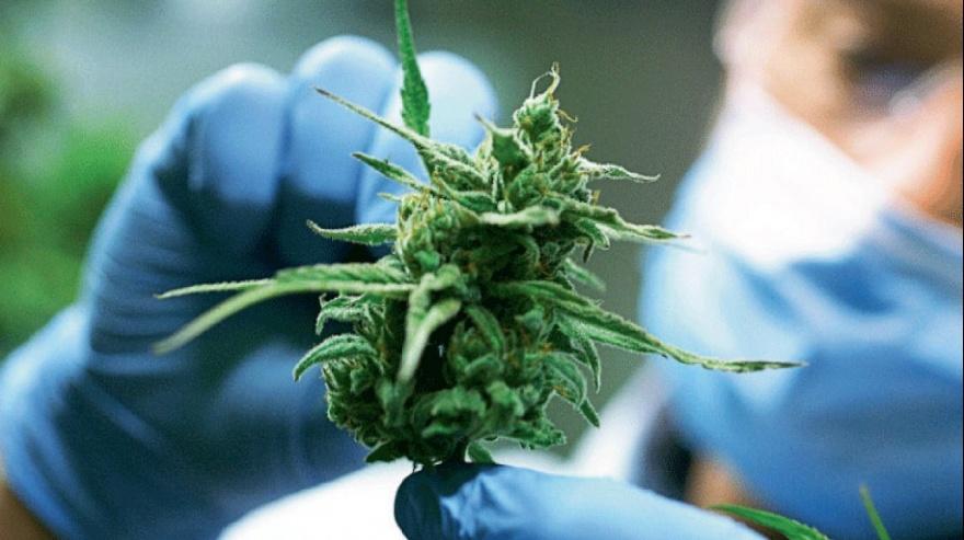 En Florencio Varela y Castelli avanzan en ordenanzas a favor del cannabis medicinal