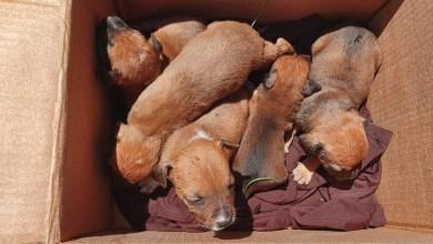 Photo of Morón: «Locos por los sin voz» ayuda a los perros callejeros