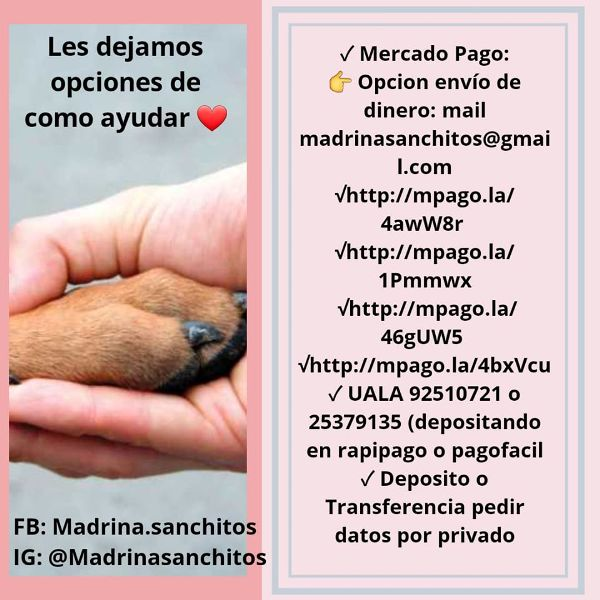 Mujeres rescatan mascotas abandonadas y las dan en adopción