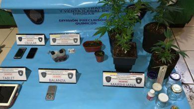 Photo of Dos dealers detenidos por cultivo y comercialización de marihuana