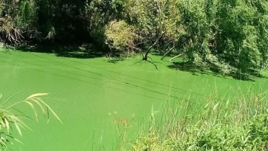 Photo of Falta de agua por algas en el río: ¿cuándo volverá el suministro en La Plata, Berisso y Ensenada?