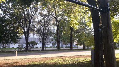 Photo of Denuncian «gimnasio clandestino» a la vera de una avenida de La Plata: «Dañan los árboles»