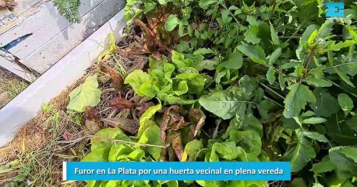La huerta vecinal en plena vereda que causa furor en La Plata