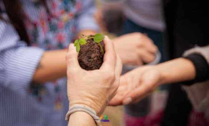 """Morón: organizaciones sociales lanzan la """"semana del árbol"""" y plantan ceibos en la Plaza Gloria"""