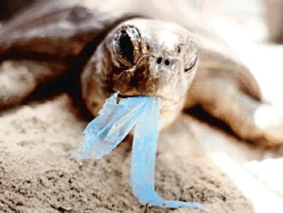 Ideas para reciclar bolsas por qué reciclar las bolsas plásticas