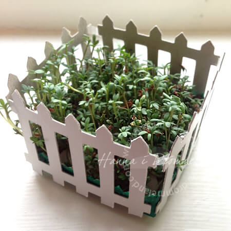 reciclaje-caja-plantas