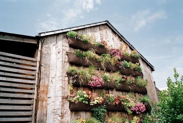 Cómo hacer un jardín vertical en las paredes exteriores