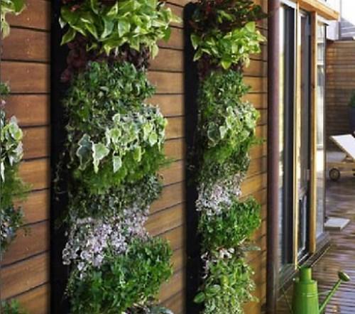 Cómo hacer un jardín vertical idea para el exterior