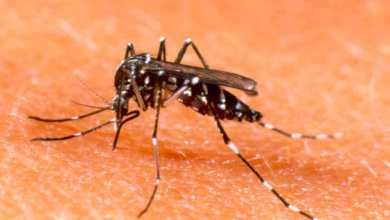 dengue-en-paraguay-diarioasuncion
