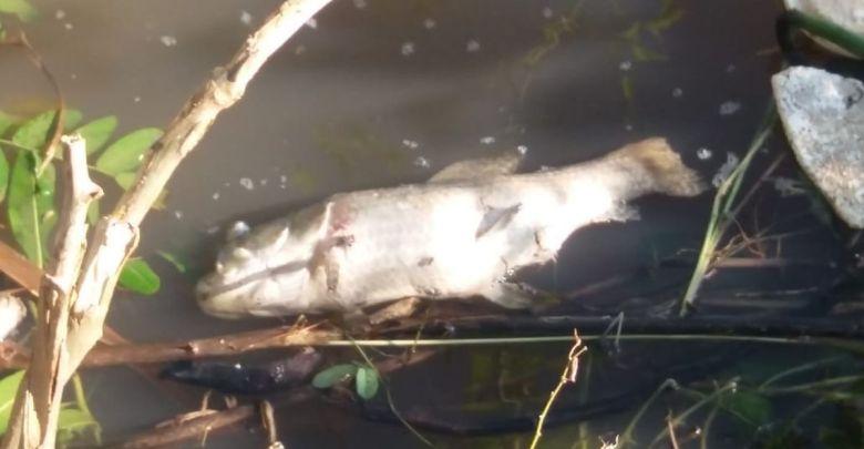 peces-muertos-rio-paraguay-diarioasuncion