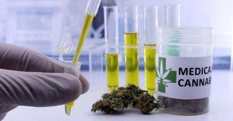 cannabis-medicinal-paraguay-diarioasuncion