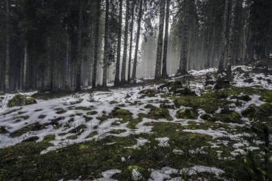 forest-nature-snow-4058-824x550