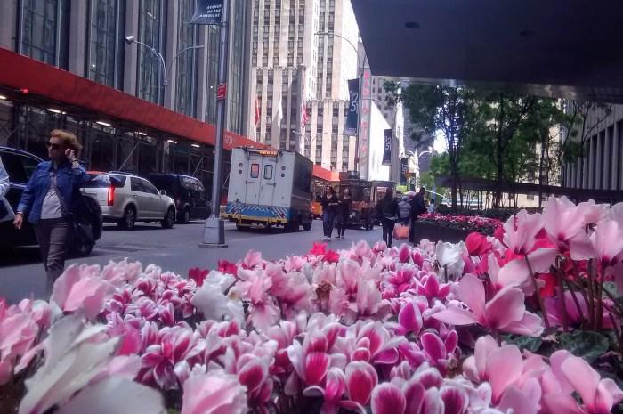 Colores de Primavera en New York City
