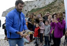 tortuga Della Diario de Alicante