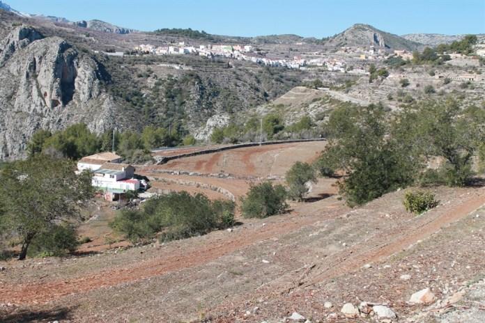 Xylella Diario de Alicante